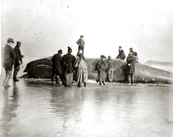 Boy on a Whale, East Hampton, undated